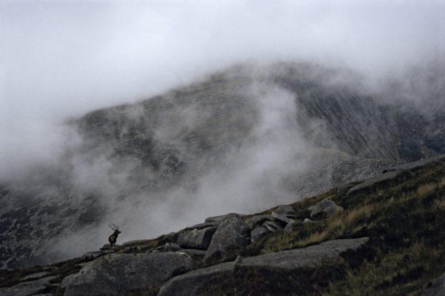 Escocia-Tato Roses-Indomitus_ciervo